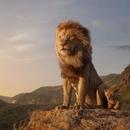 '라이온 킹' 호불호 리뷰|위대한 원작, 경이로운 리메이크 vs 자연 다큐멘터리